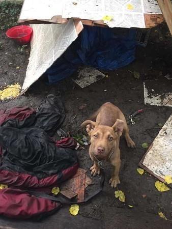 <b>在后院流浪的狗狗,在救助站遇上有缘主人,幸福地枕在哈士奇身上</b>
