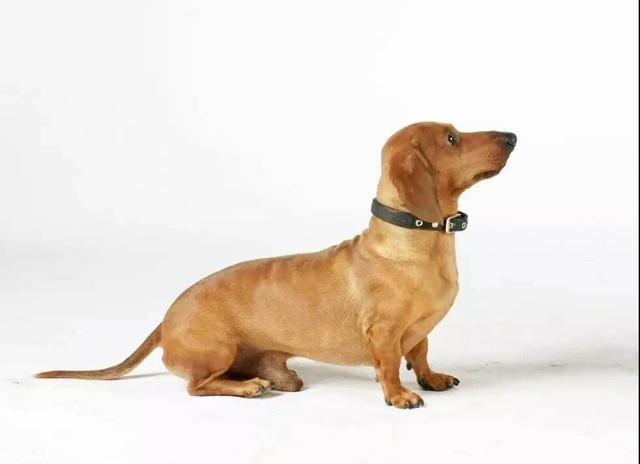 搜索不是警犬才有的技能,你的狗狗也可以,教你训练狗狗找物