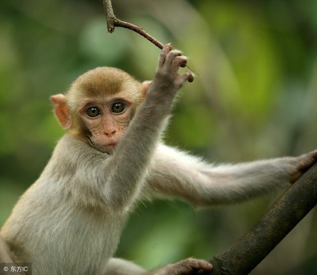 大金猴:16号鸿运当头时来运转要什么来什么大爆发!