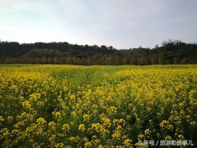 重庆一个江上田园绿意盎然 南岸广阳岛漫游