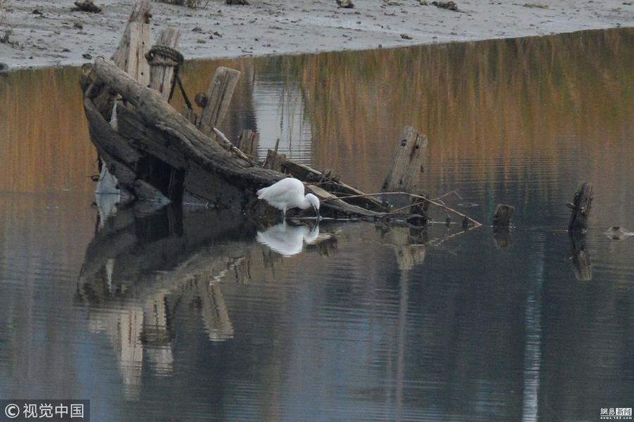 罕见!国家一级保护动物东方白鹳现身青岛