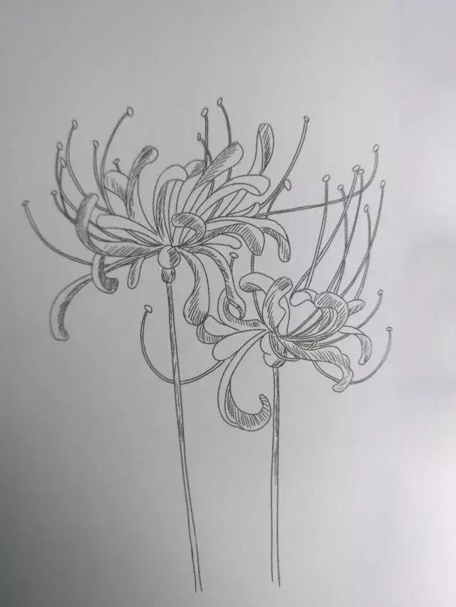 因为彼岸花的花瓣比较细小长,所以铺色的时候得特别注意花瓣的形状