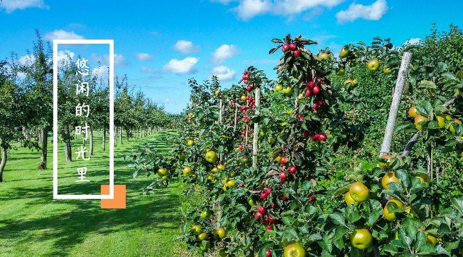 生草果园培肥土壤施用有机肥的方法