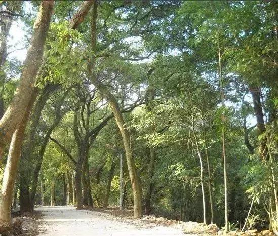 因地制宜,村背靠风景林,面迎门口塘,东靠红桥,西倚仙龙公路.