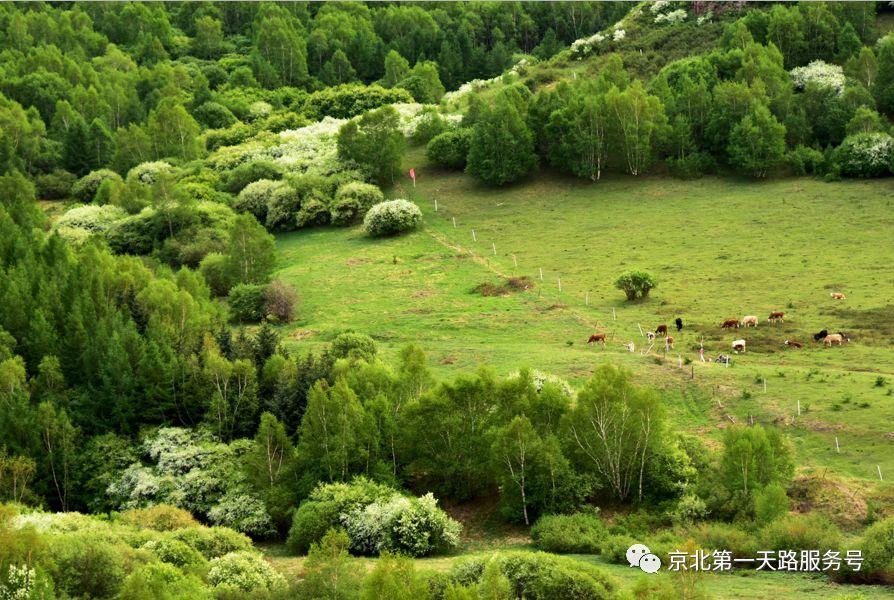 旅游 正文  柳树沟森林公园(又名柳树沟草树花园)位于承德市丰宁满族
