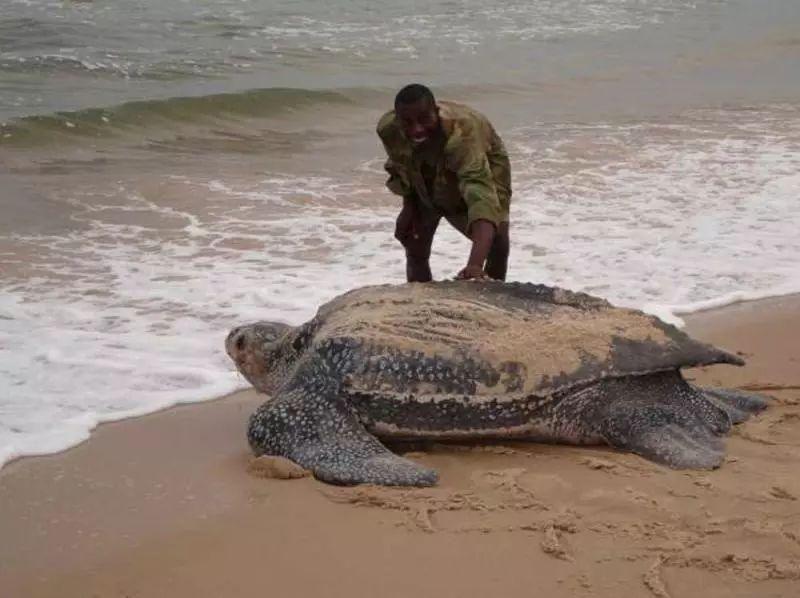 海龟-古老的爬行动物 5.23世界海龟日