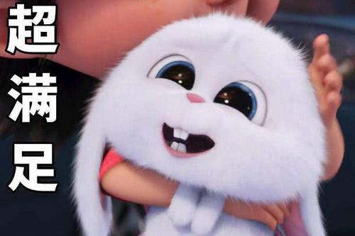 被抛弃,却又渴望被爱的,行走的表情--兔子小白微信结婚祝福大全表情图片大全图片图片