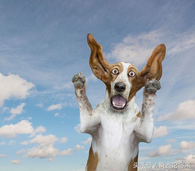 其实预测地震很简单,只要能让动物开口说话!