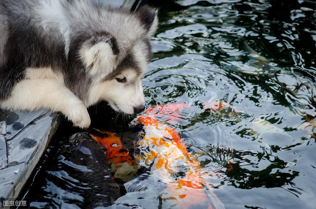 狗狗能吃鱼吗?狗狗吃鱼好处多,哪种鱼对狗来说比较好?