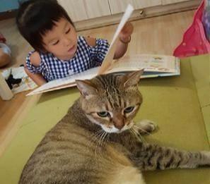 猫咪摸了小主人,小主人就跑爸爸怀里大哭,猫:我可什么都没做
