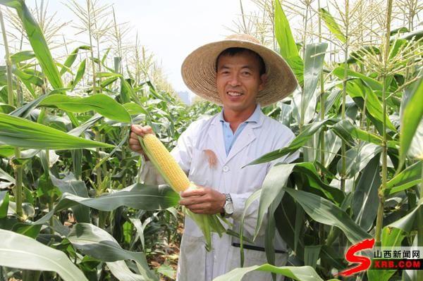 甜玉米专家卢保红:好品种,好技术,才有好行情