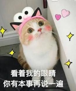 可爱小猫表情包图片大全_猫咪卖萌表情包配字