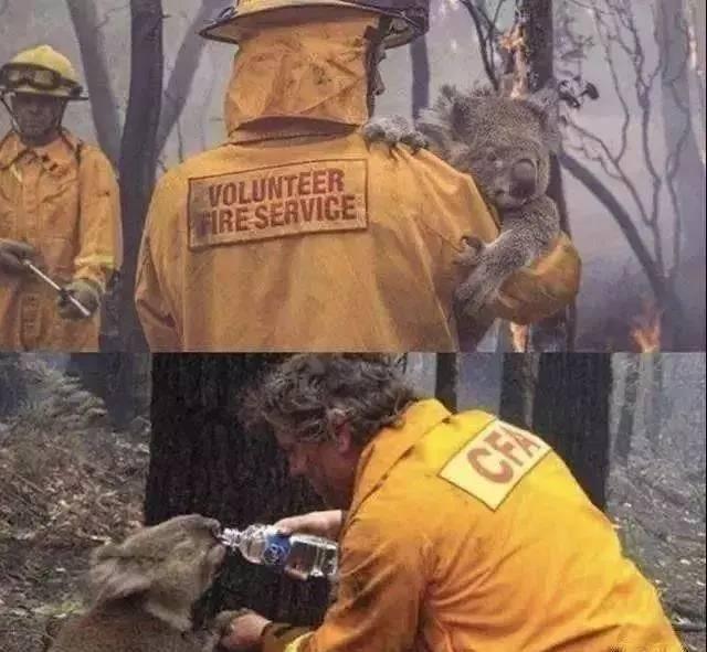澳洲大火燒的是哪個國家