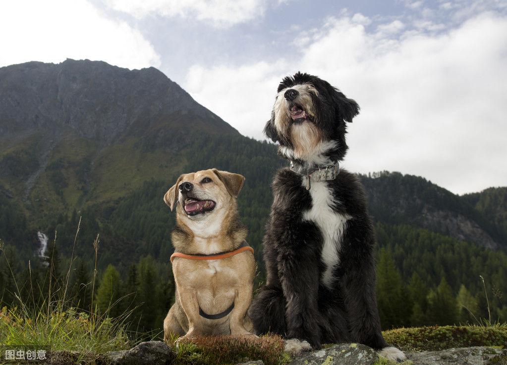 <b>想带狗狗出门郊游,主人需要做些什么准备?才能让狗狗愉快地玩耍</b>