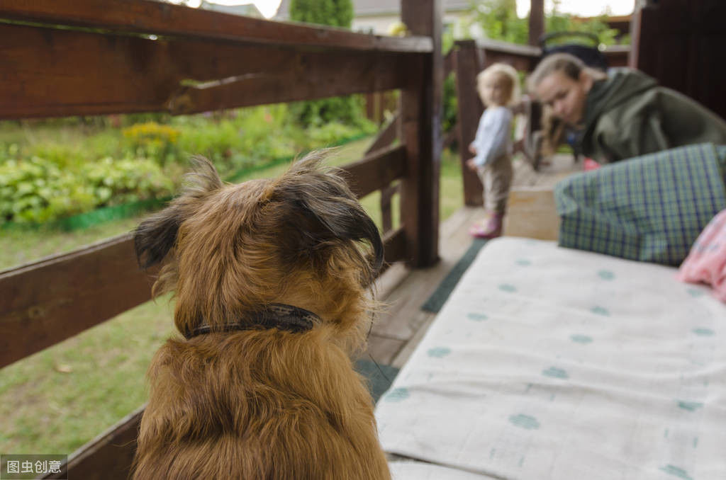 狗狗不听主人的话,不是不聪明,可能是它们根本没有在听你说话