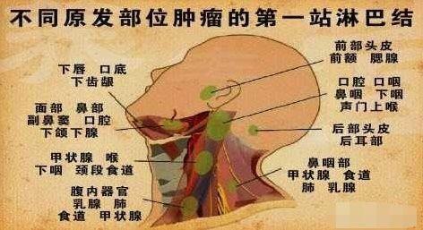 人体淋巴结分布�_总结:甲状腺和淋巴结属于人体不同的器官,甲状腺是内分泌器官,甲状腺