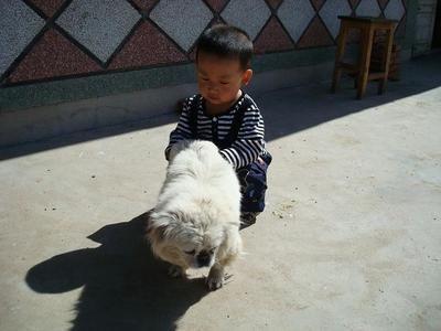 2岁宝宝与宠物狗玩耍,回家第二天又咳又喘,检