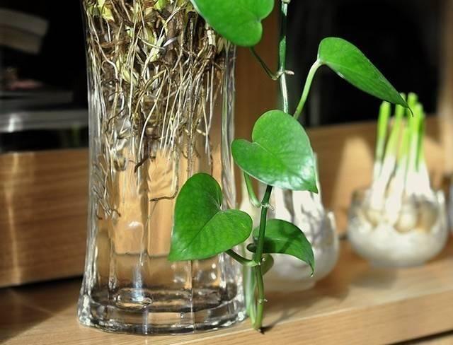 盆景 盆栽 瓶子 植物 640_488图片