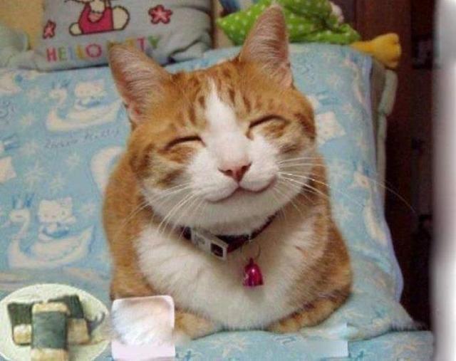 超级可爱猫咪委屈图