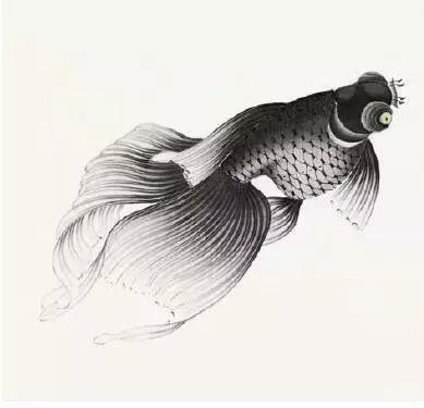 工笔画金鱼超详细,学习了!