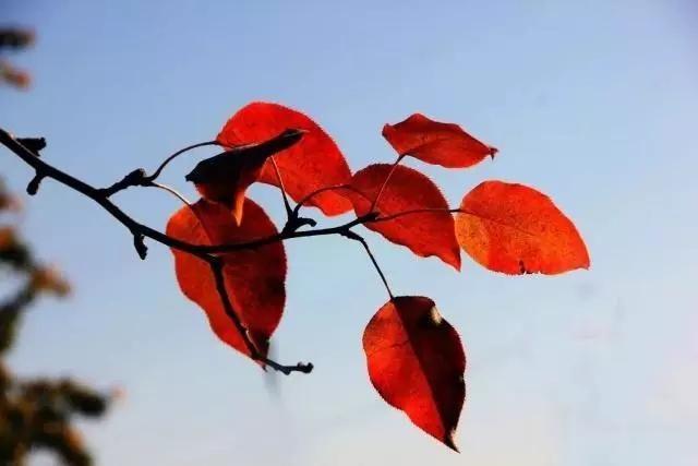 8首描写松树的古诗词:亭亭山上松,瑟瑟谷诱惑情趣美女写真中风尤果图片
