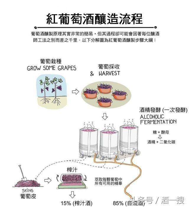 将复杂的红葡萄酒酿造流程 从如何经由采收,破皮,发酵等一系列步骤