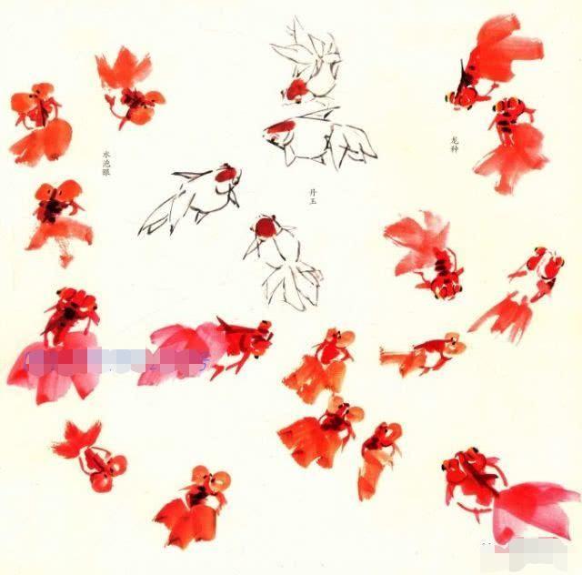 五,红鲤鱼的画法步骤与动态