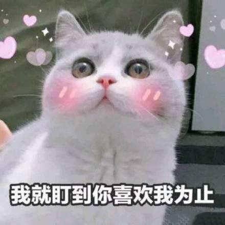 关于表白的情侣|我和你用青蛙头像图表情卡通表情包图片
