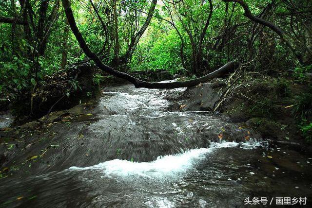 水上森林也很有特色的景点荔波小七孔图片