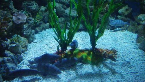 壁纸 海底 海底世界 海洋馆 水族馆 500_281