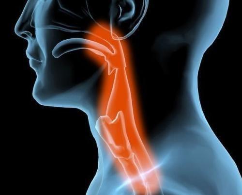 咽喉到胃的结构图
