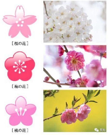 春天来了,一张图简单教你分辨梅花,桃花和樱花