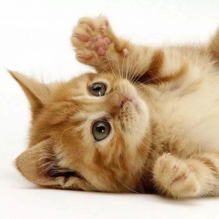 社会 正文  喜欢用小动物,尤其是猫猫狗狗做头像的,一定是个可爱的人.