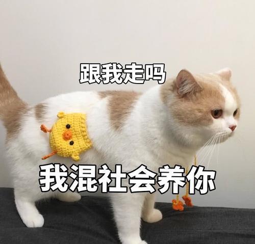 傲娇不好表情:生气了,哄猫咪的那种欧克表情包图片