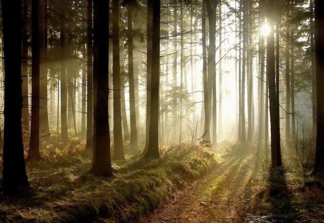 自己选择的路,再泥泞也要走完,或许,泥泞的路上也别有一番风景