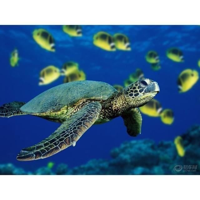 秦皇岛新澳海底世界位于秦皇岛市市区南侧河滨路的海边区域,是