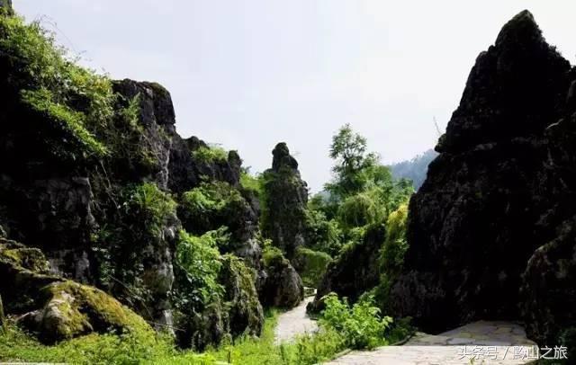 国内 正文  贵阳森林野生动物园 绿色石林:位于修文县大石布依族自治