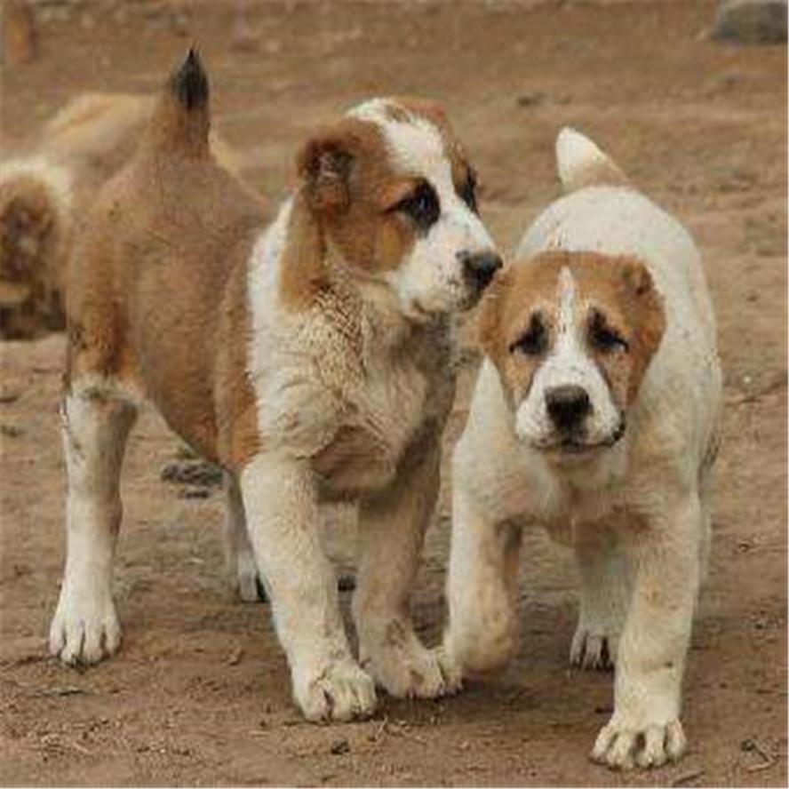 小型肉狗养殖场怎么建设?