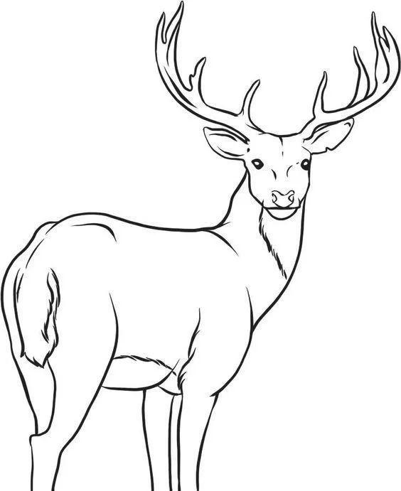 50例动物简笔画素材,收藏临摹