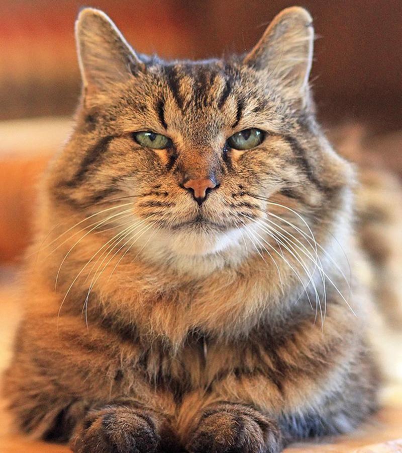 世界上最长寿的猫已成精,这只猫现已活到122岁了!