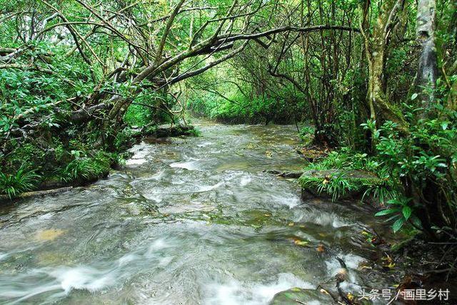 财经 消费旅游 正文  小七孔景区的水上森林也很有特色,水上森林位于图片