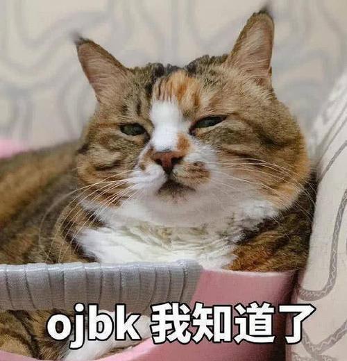 超萌猫咪表情:开始了,生气哄吧表情电话包可爱挂图片