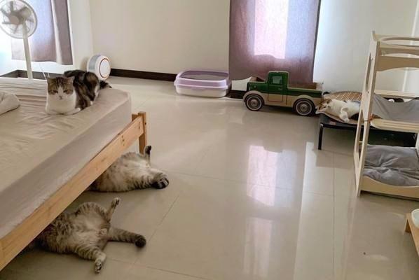 """两""""师傅""""躺在床底维修,两只猫咪却在旁边袖手旁观,非常不团结"""