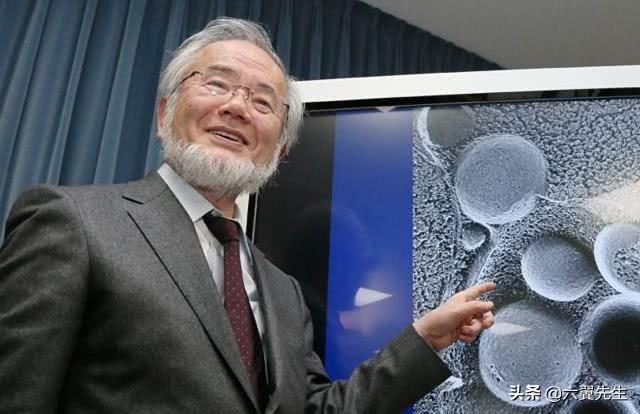 日本首创:可恢复记忆的药!