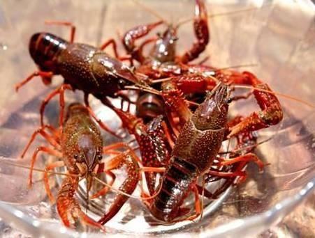 小龙虾竟然这么脏?明星戚薇却最爱吃虾头?