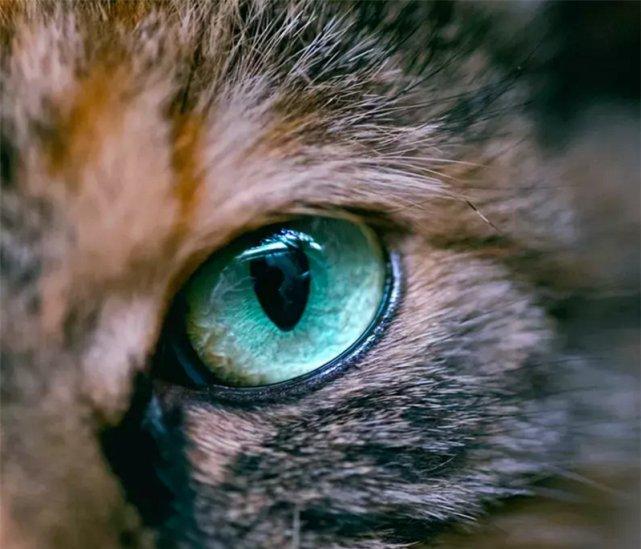 猫咪的黑白光影!黑白照片更显街猫的气势!网友:被帅哭!