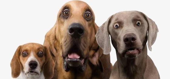 最爱记仇的5种狗,一旦得罪它就会被记恨,你还敢惹吗?