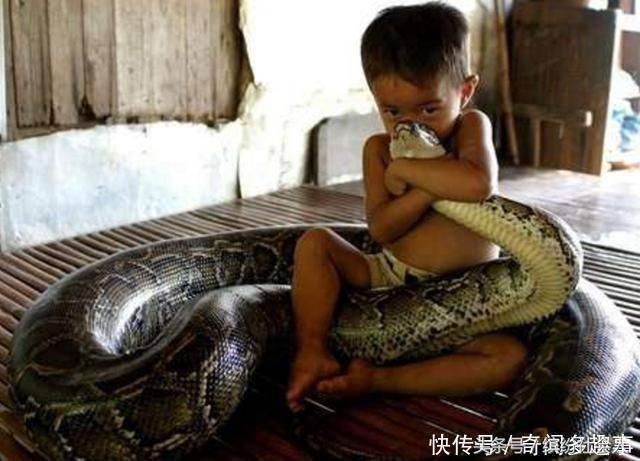 男孩自小和蟒蛇同睡,其母发现一个问题,蟒蛇总会缠绕女儿双腿