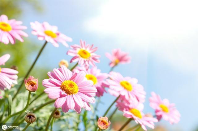描写春天景色的古诗名句经典,一起来v景色情趣用品有图片