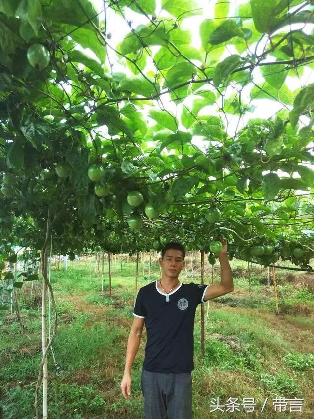 漳州|黄色西番莲孕育的健康生活
